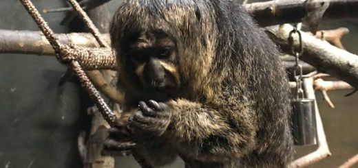 Rope Ladder monkey enrichment